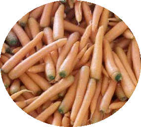 Carrot_Serbia