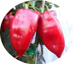 Red Pepper sweet